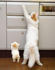showing the new kitten around