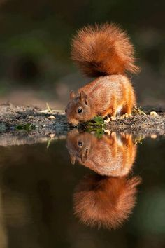 I love squirrels! They are just too spunky and adorable! :) Reminds me to live life with energy!