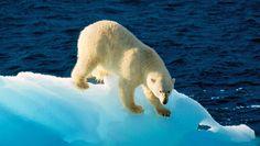 Land of the Polar Bears!