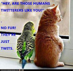 Twits