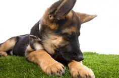 Votre chien aime batifoler dans les herbes, il lui faut un remède naturel préventif contre les tiques ou les puces. On peut trouver de nombreux produits en magasins ou chez son vétérinaire, cependant ceux-ci peuvent être toxiques. Du côté des remèdes entièrement naturels voici deux recettes…