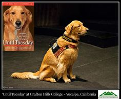 Until Tuesday: A Wounded Warrior and the Golden Retriever Who Saved Him with Tuesday in Yucaipa, California ~  What a phenomenal time we had at Crafton Hills College!  ~  (Photo credit: Alex & Bruce Woodcock, Alexpressions Photography - © 2015)