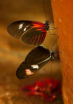 Butterflies by Linda Tiepelman on 500px.com