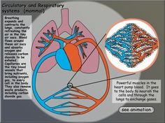 Body Systems - Interactive Learning Sites for Education