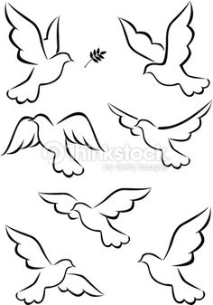 Vector Art : Flight of dove