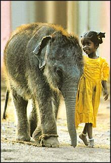 Best of Friends This is so dang beautiful!! Elephants India