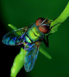 20 Imagens que farão você ter uma visão diferente sobre os insetos