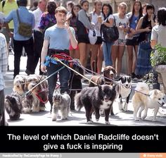 Daniel Radcliffe has a new job! And he's totally killing it. Here Is A Picture Of Daniel Radcliffe Walking 12 Dogs While Smoking A Cigarette Daniel Radcliffe, Harry Potter Love, Harry Potter Fandom, Harry Potter Memes, Fandoms, Slytherin, Hogwarts, Ron Y Hermione, No Me Importa