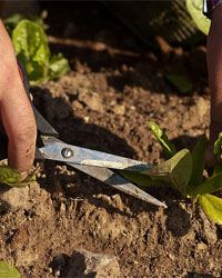 10 essential garden tools