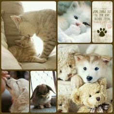 Collage of Beautiful Colors Love Collage, Color Collage, Beautiful Collage, Collages, Animals And Pets, Cute Animals, My Beautiful Friend, Colour Board, Beautiful Creatures