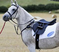 44 Best Horse Bridles Uk Dressage Bridle Jumping Bridles All