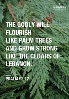 the godly will flourish like palm trees and grow strong like the cedars of Lebanon  {Psalm 92:12}