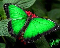 help mij ik heb de groene vlinder inplaats van de rode hond