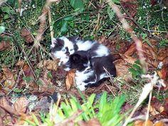 cute kittens   Flickr - Photo Sharing!