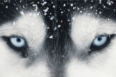 Tim Flach: обалденные фотографии животных