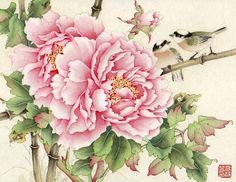Chinese painting - Peony                                                                                                                                                                                 More