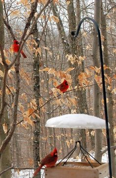 """I hope that our home attracts cardinals so that I will look out the window and remember """"Be still and know that I am God."""""""