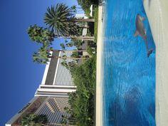 No hotel Mirage, é possível ser treinador de golfinhos por um dia!