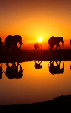 Ode to the World — orangelifestyle: Sunset Africa. Love of family, mirrored. Magnificent!