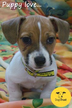 This Terrier Cross puppy, Prue at Dogs Trust Ballymena is looking for a home that can give her basic training and house training. Like a typical terrier Prue is full of fun and loves playing with toys. To view all our dogs available for rehoming, please visit www.dogstrust.org.uk.
