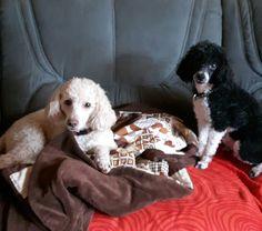 Hunde Foto: Ellen und Kimi und Caramio - Zwei beim Fototermin. Hier Dein Bild hochladen: http://ichliebehunde.com/hund-des-tages  #hund #hunde #hundebild #hundebilder #dog #dogs #dogfun  #dogpic #dogpictures