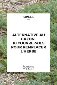 Alternatives au gazon : 10 couvre-sols pour remplacer la pelouse - Health and wellness: What comes naturally Garden Trellis, Garden Planters, Herb Garden, Vegetable Garden, Grass Alternative, Deer Resistant Garden, Garden Online, Ground Covering, Ground Cover Plants