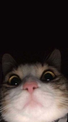 Source by videos wallpaper cat cat memes cat videos cat memes cat quotes cats cats pictures cats videos Cute Cat Wallpaper, Funny Phone Wallpaper, Tumblr Wallpaper, Animal Wallpaper, Cartoon Wallpaper, Photo Wallpaper, Wallpaper Backgrounds, Homescreen Wallpaper, Purple Wallpaper Iphone
