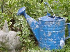 Gorgeous chippy blue vintage watering can