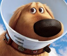 The Cone of Shame: The movie coined a new phrase that is already becoming common in among animal lovers.
