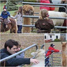 mini petting zoo, maybe?
