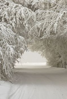Wishing for a snow day like this.