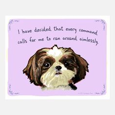 Shih Tzu by Tiny Confessions