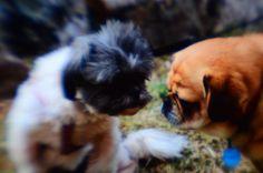 Photo taken with a Lynny Lens System on a DSLR camera - Learn more at http://LynnyLens.com    #lynnylens #animals #animal #creative #photography #slr #dslr #camera #nikon #canon #pentax #olympus #sonyalpha #minolta #leica