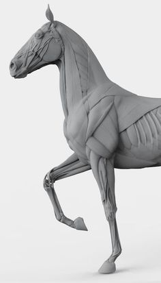 Marvelous Drawing Animals In The Zoo Ideas. Inconceivable Drawing Animals In The Zoo Ideas. Horse Anatomy, Animal Anatomy, Anatomy Art, Horse Sculpture, Animal Sculptures, Horse Drawings, Animal Drawings, Anatomy Sculpture, Anatomy For Artists