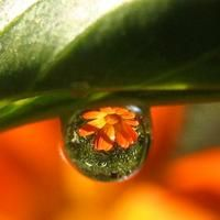 Browse Water Drops photos and videos.