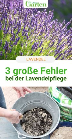Hydrangea Seeds, Hydrangea Care, Garden Paths, Garden Landscaping, Balcony Plants, Garden Deco, Types Of Plants, Garden Projects, Home And Garden