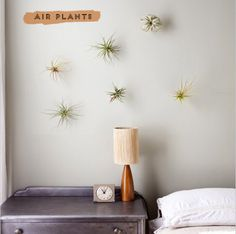 Image from http://www.athomeinlove.com/wp-content/uploads/2013/01/air_plants.jpg.