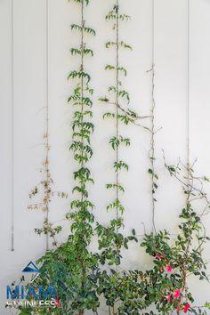 Green wall vertical garden on the Gold Coast