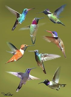 beleive these are hummingbirds