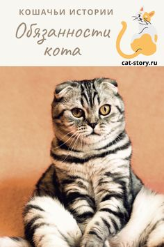 Обязанности кота — Кошачьи истории Cats, Animals, Gatos, Animales, Animaux, Animal, Cat, Animais, Kitty
