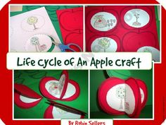 Apple Craft: {Life Cycle of an Apple Craftivity} product from Sweet-Tea-Classroom on TeachersNotebook.com
