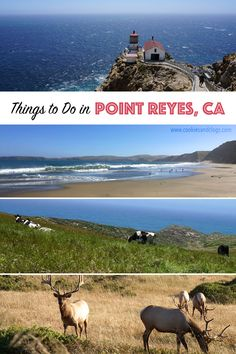 Cookies & Clogs   Want to take a family road trip to Point Reyes National Seashore in Point Reyes, CA? Here are several things to do with the kids including the Point Reyes Lighthouse. See what the climb down is like and if it's worth the trek.