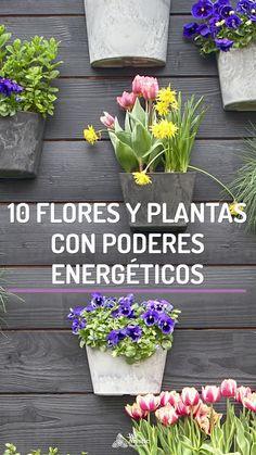Las flores y plantas tienen una determinada energía que podemos utilizar en nuestro favor en nuestro día a día. Conoce 10 plantas con poderes energéticos.