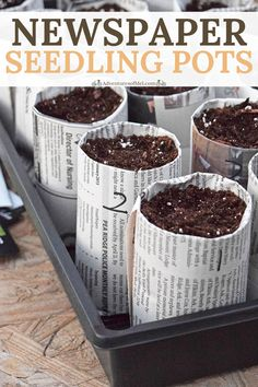 How to make your own newspaper seedling pots for starting seeds indoors, along with tips and ideas for soil, supplies, and growing plants from seed. How to make your own newspaper seedling pots for starting seeds indoors, along w. Garden Ideas Diy Cheap, Diy Garden Projects, Gardening For Beginners, Gardening Tips, Gardening Vegetables, Table Color, Starting Seeds Indoors, Growing Plants From Seeds, Plant Seeds Indoors