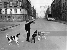 A boy playing with dogs in a road of tenement housing in the Gorbals area of Glasgow The tenements...