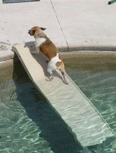 This pet step provides a safe non-slip ramp for your dog to use when getting in and out of the car or swimming pool. Sturdy design is safe for pets and prevents injuries from jumping out of vehicles. http://www.intheswim.com/Pool-Accessories/Steps-and-Ladders-for-In-Ground-Pools/Pet-Step/