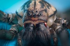 65 best spiders images spiders the spider amphibians rh pinterest com