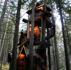 Tree house. British Columbia