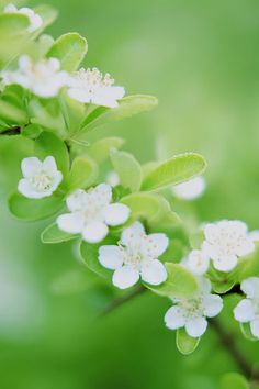Romantic Flowers, Beautiful Flowers, Dogwood Flowers, Language Of Flowers, Gerbera, Lily Of The Valley, Chrysanthemum, Carnations, Geraniums