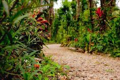Have you tried the hiking trails yet? www.belizetreehouses.com #travel #adventure #Belize